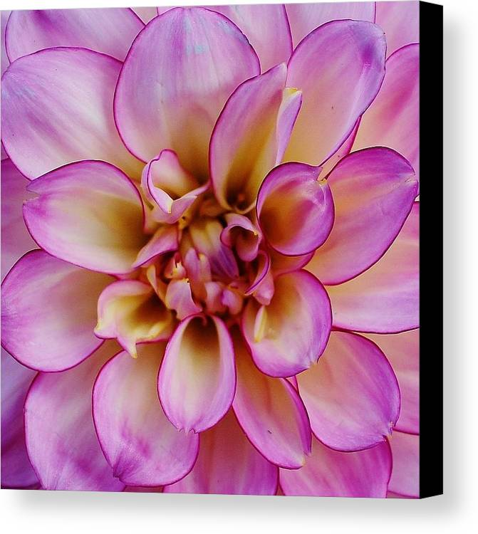 Hudson Valley Flowers Canvas Print featuring the photograph The Art In Flowers 1 by Thomas McGuire