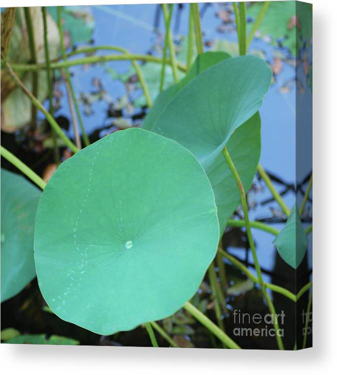 Canvas Print featuring the photograph Crossing The Lily Pond Outback Nubmer Two Square by Heather Kirk
