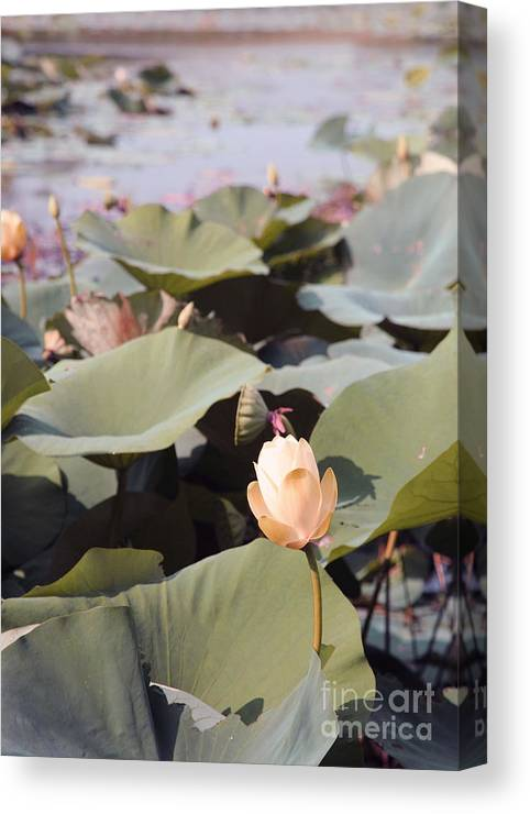 Lotus Canvas Print featuring the photograph Lotus by Amanda Barcon