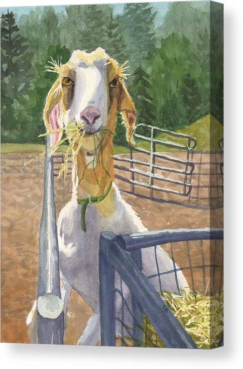 Goat Canvas Print featuring the painting Claudette's Snack by Sharon E Allen