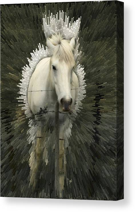 Horse Canvas Print featuring the photograph Fun With Extrude Tool by Jim Painter