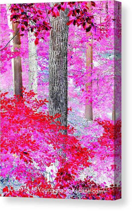 Dreamscape Red Forest Canvas Print featuring the photograph Red Forest by JCYoung MacroXscape