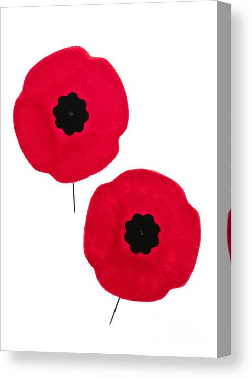 Remembrance Day Poppies Canvas Print Canvas Art By Elena Elisseeva