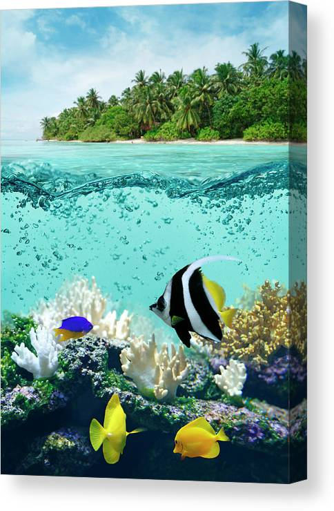 Bedrock Canvas Print featuring the photograph Underwater Life In Tropical Sea by Narvikk