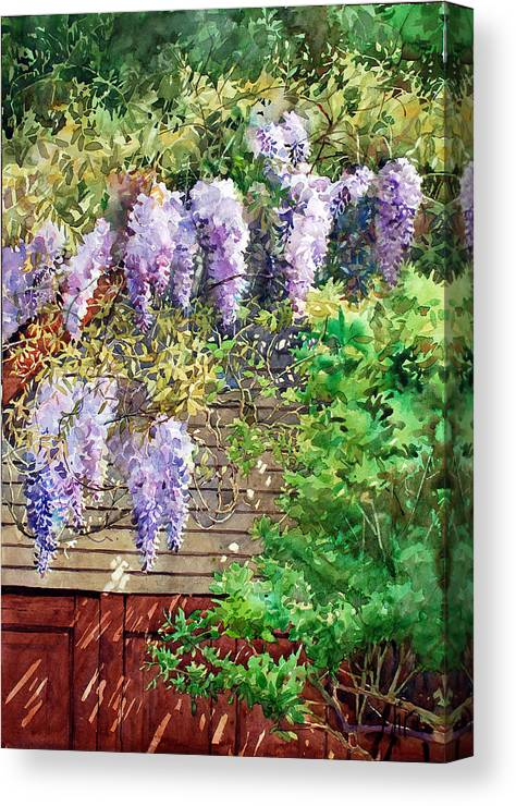 Peter Sit Watercolor Canvas Print featuring the painting Blooming Wisteria by Peter Sit