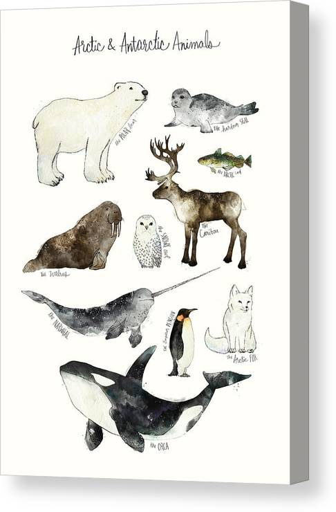 Chart Canvas Print featuring the painting Arctic and Antarctic Animals by Amy Hamilton