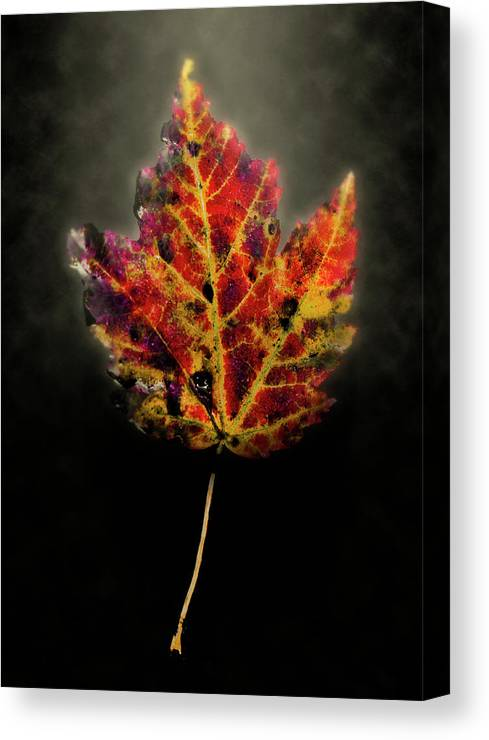 Leaf Canvas Print featuring the photograph Autumn by Jim Painter