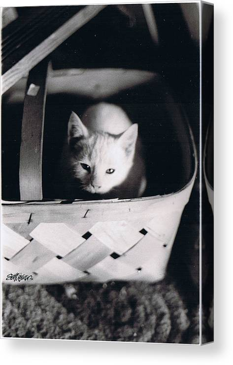 Cat Canvas Print featuring the photograph Basket Full Of Charlemagne by Seth Weaver