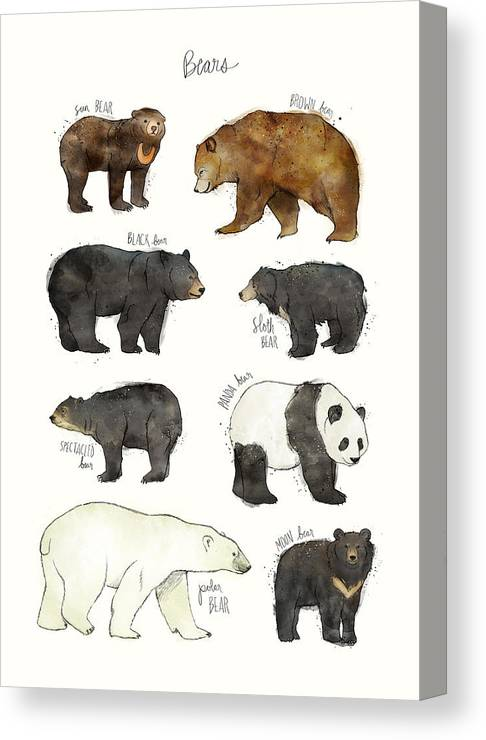 Bear Canvas Print featuring the drawing Bears by Amy Hamilton