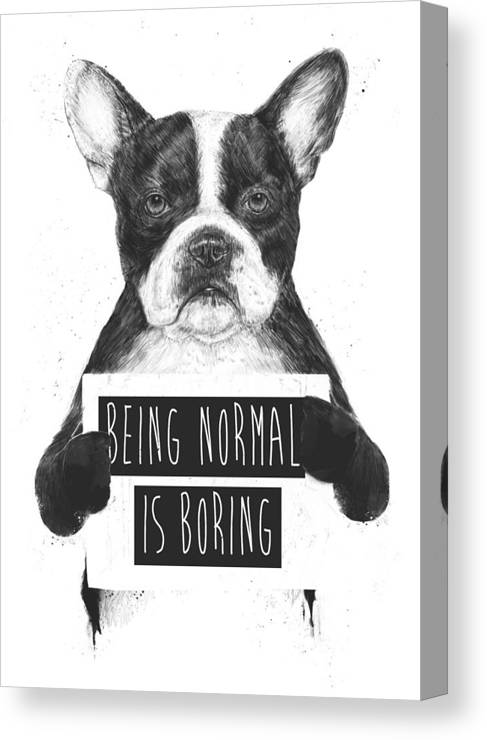Bulldog Canvas Print featuring the drawing Being normal is boring by Balazs Solti