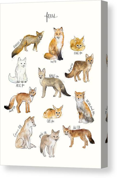 Blanford�s Fox Canvas Print featuring the painting Foxes by Amy Hamilton