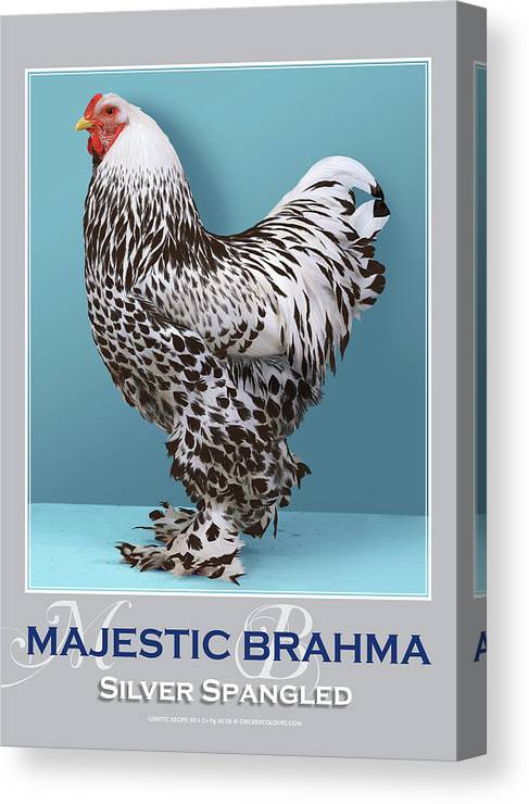 Poultry Canvas Print featuring the digital art Majestic Brahma Silver Spangled by Sigrid Van Dort