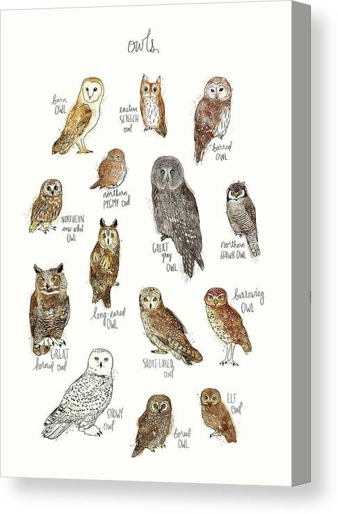 Owl Canvas Print featuring the painting Owls by Amy Hamilton