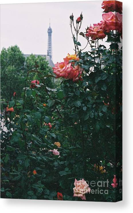 Roses Canvas Print featuring the photograph Pink Roses and The Eiffel Tower by Nadine Rippelmeyer