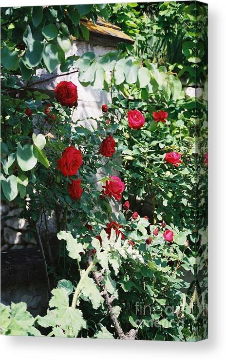 Floral Canvas Print featuring the photograph Provence Red Roses by Nadine Rippelmeyer