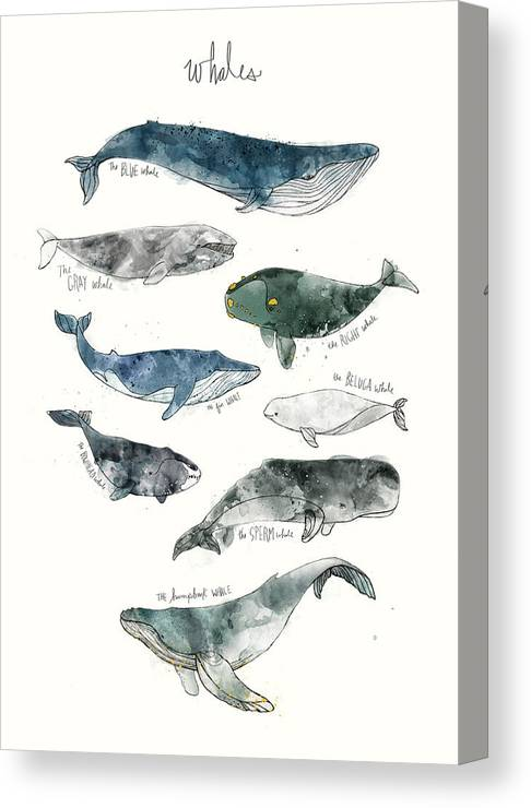 Whales Canvas Print featuring the painting Whales by Amy Hamilton