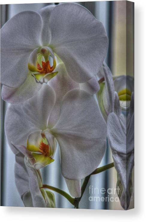 National Orchid Day Canvas Print featuring the photograph White Orchids by David Bearden