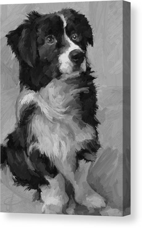 Border Canvas Print featuring the painting Black and White Pup by Scott Waters