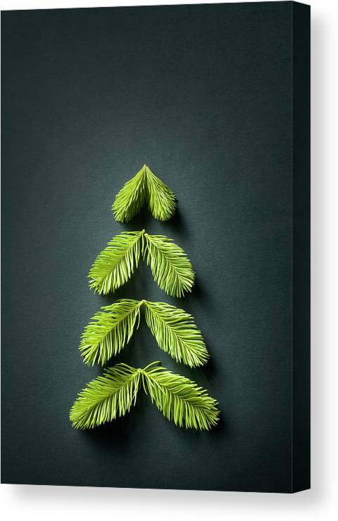 Needle Canvas Print featuring the photograph Christmas Tree by Malerapaso