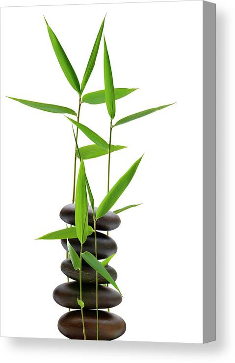 Bamboo Canvas Print featuring the photograph Feng Shui Bamboo by Pixhook