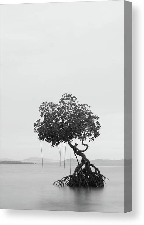 Scenics Canvas Print featuring the photograph Lonely Tree by Ed Rojas