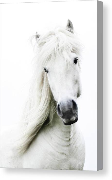 Horse Canvas Print featuring the photograph Snowhite by Gigja Einarsdottir
