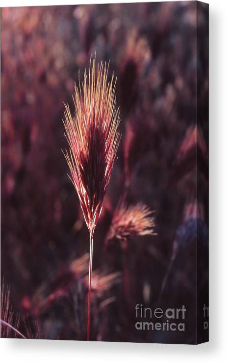 Canvas Print featuring the photograph Untitled by Randy Oberg