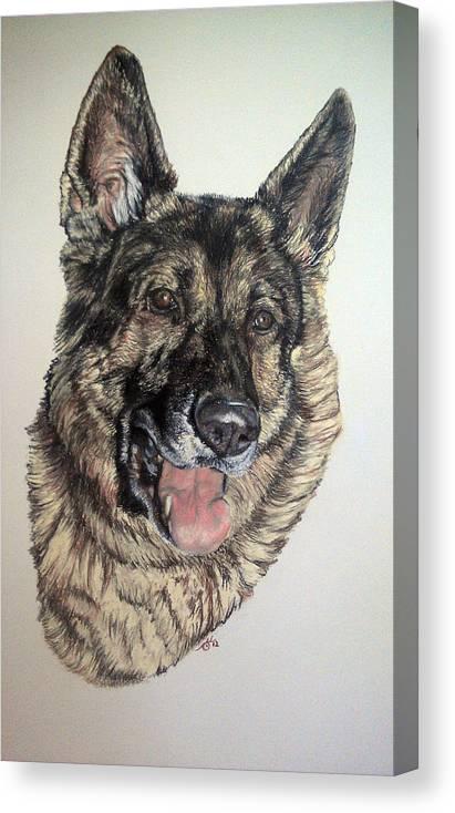 German Shepherd Canvas Print featuring the pastel German Shepherd Rudi by Ann Marie Chaffin