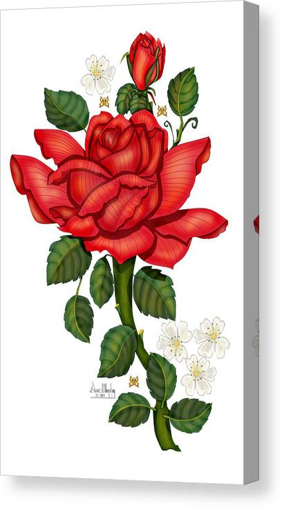 Hand-drawn Digital Art; Hand-drawn Digital Rose; Digital Rose; Anne Norskog Rose; Red Rose; Red Rose On White Background Canvas Print featuring the painting Christmas Rose 2011 by Anne Norskog