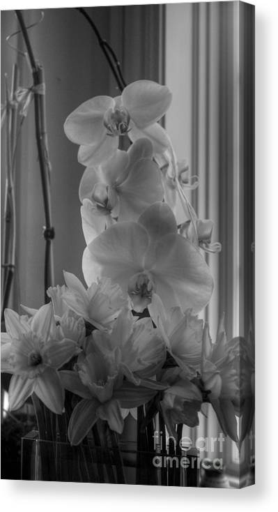 Orchids Canvas Print featuring the photograph Orchids 2 by David Bearden