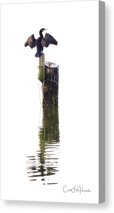 Birds Canvas Print featuring the digital art Cormorant Sunning by Carol Fox Henrichs