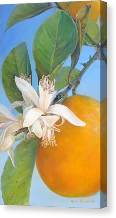 Floral Painting Canvas Print featuring the painting Fleurs d oranges by Muriel Dolemieux