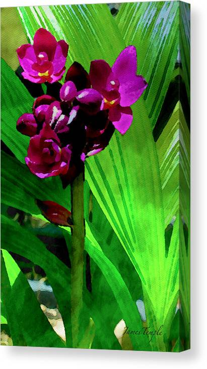 Natures Gift Canvas Print featuring the digital art Mother Nature's Gift by James Temple