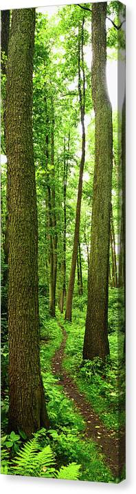 Scenics Canvas Print featuring the photograph Footpath Between The Trees by Tomchat