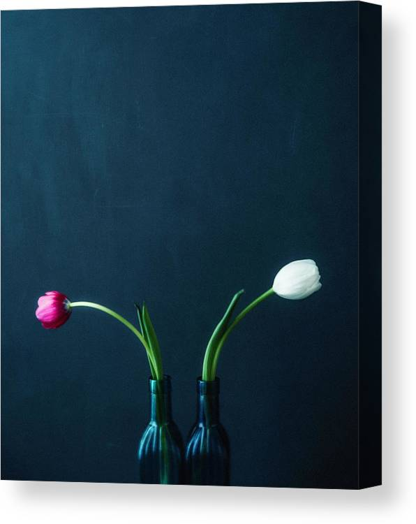 Mother's Day Canvas Print featuring the photograph Tulip Still Life For Mothers Day by Catlane