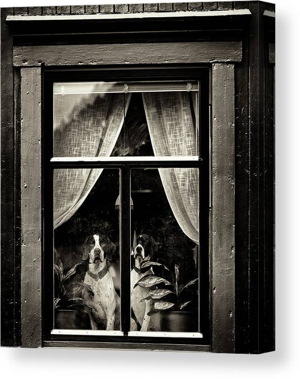 Dogs Canvas Print featuring the photograph Dogs by Julien Oncete