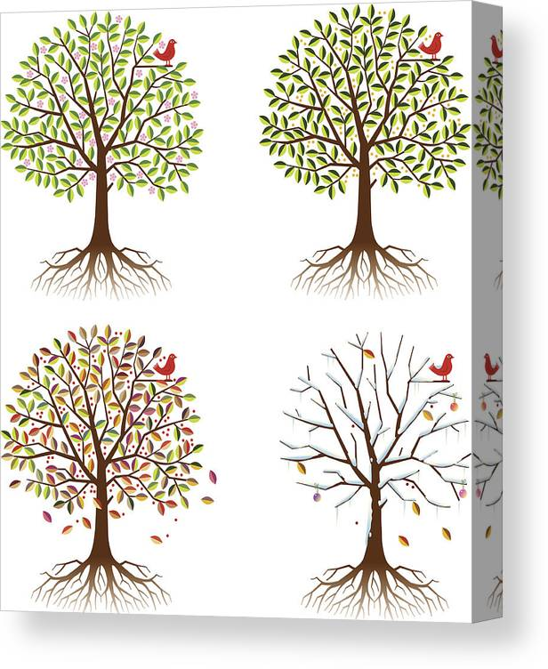 Environmental Conservation Canvas Print featuring the digital art Four Seasons In One Tree by Johnwoodcock