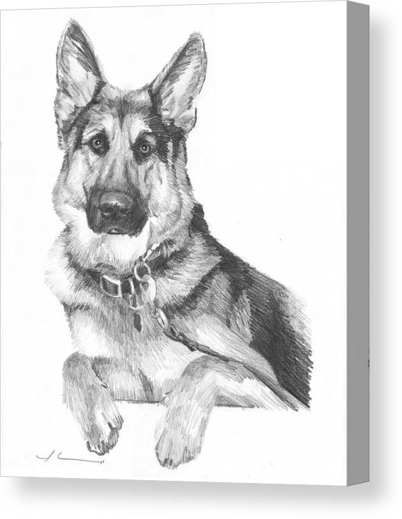 <a Href=http://miketheuer.com Target =_blank>www.miketheuer.com</a> Shepherd Dog Pencil Portrait Canvas Print featuring the drawing Shepherd Dog Pencil Portrait by Mike Theuer