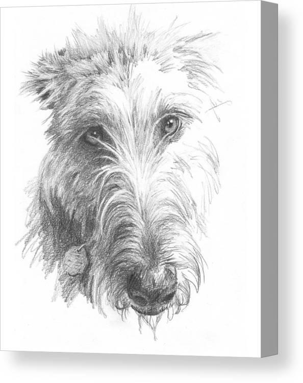 <a Href=http://miketheuer.com>www.miketheuer.com</a> Wolf Hound Pencil Portrait Canvas Print featuring the painting Wolf Hound Pencil Portrait by Mike Theuer