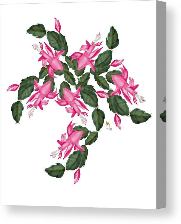 Christmas Cactus Canvas Print featuring the painting A Swirl of Pink Cactus Blooms by Anne Norskog