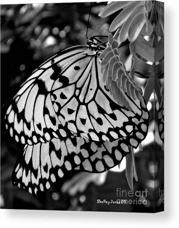 Photograph Canvas Print featuring the photograph Black and white butterfly by Shelley Jones