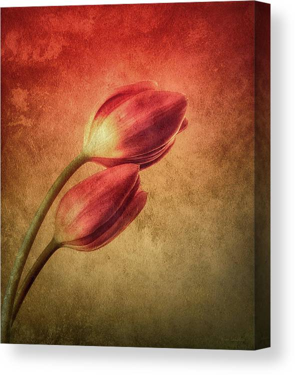 Tulips Canvas Print featuring the photograph Colorful Tulips Textured by Wim Lanclus
