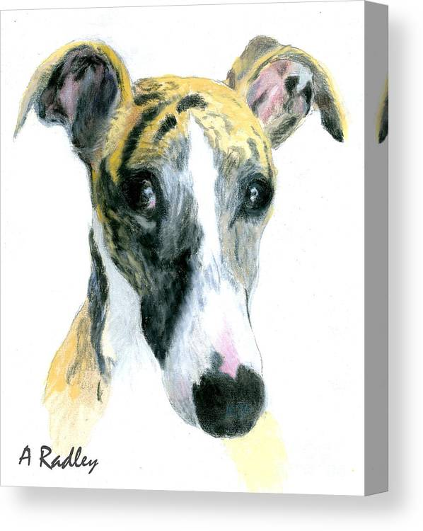 WHIPPET MAN AND HIS DOGS GREAT DOG PHOTO PRINT MOUNTED READY TO FRAME