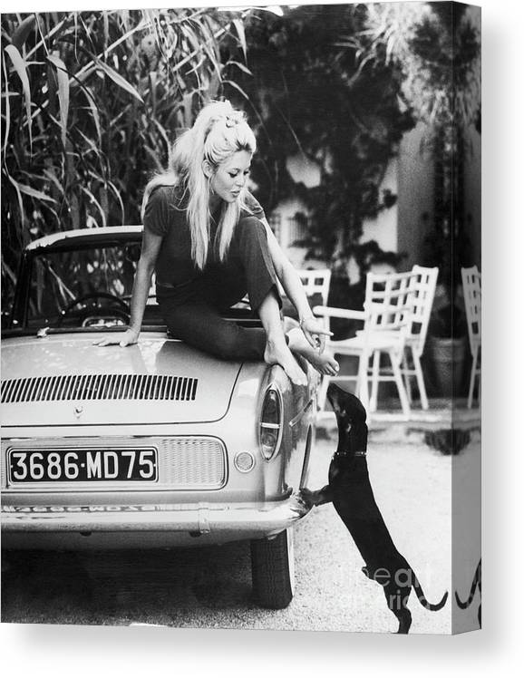 Pets Canvas Print featuring the photograph Brigitte Bardot With Dachshund by Bettmann