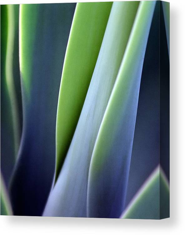 Sparse Canvas Print featuring the photograph Green Smooth Leaves by Sergeo syd