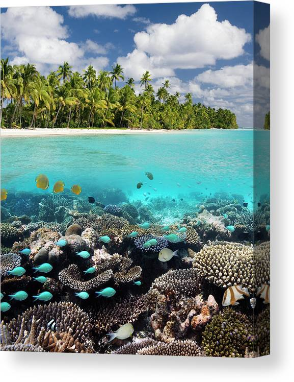 Underwater Canvas Print featuring the photograph Tropical Paradise - The Maldives by Steve Allen