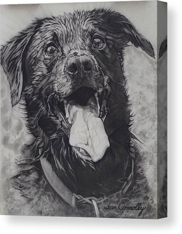 Dog Canvas Print featuring the drawing Charlie Dog by Sean Connolly