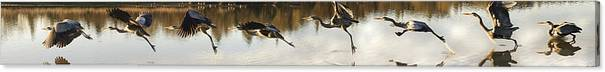 Nature Canvas Print featuring the digital art Anatomy Of Flight by William Horden