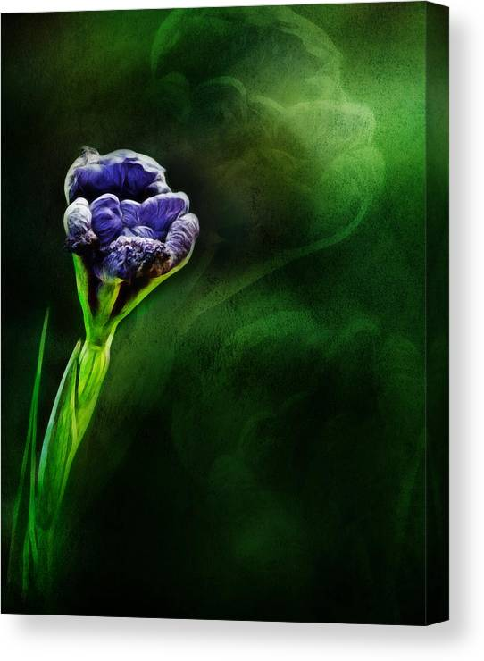 Limited Time Promotion: Budding Iris Stretched Canvas Print