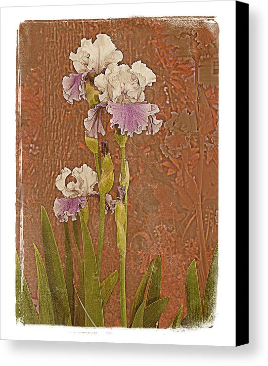 Flowers Garden Beautiful Old Iris Canvas Print featuring the photograph Iris 1 by Inesa Kayuta